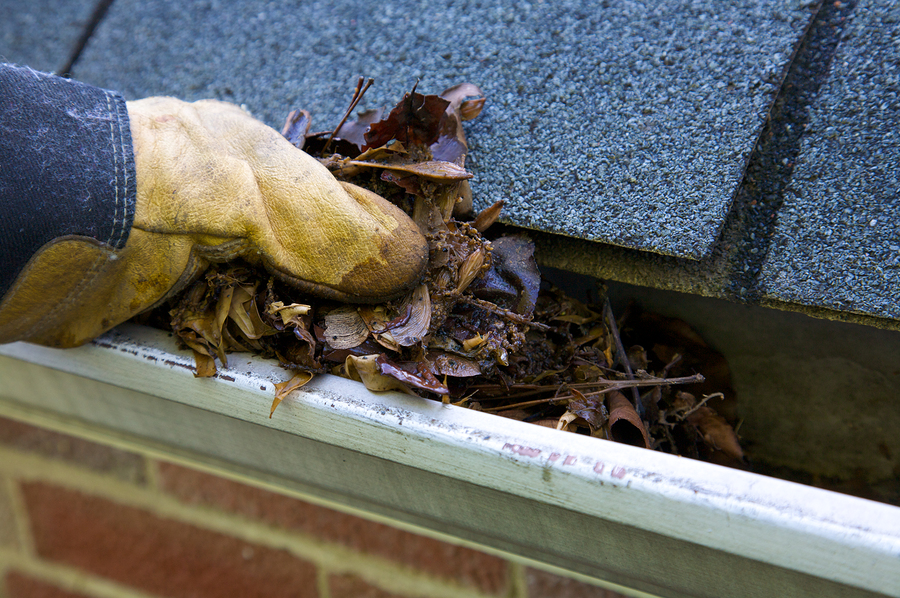 Fall Cleanup - Leaves In Gutter Cleaning Vancouver